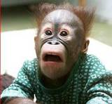 Shocked monkey